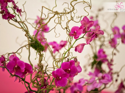 wesele-orchidea-japonskie